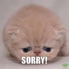 Sorry cat